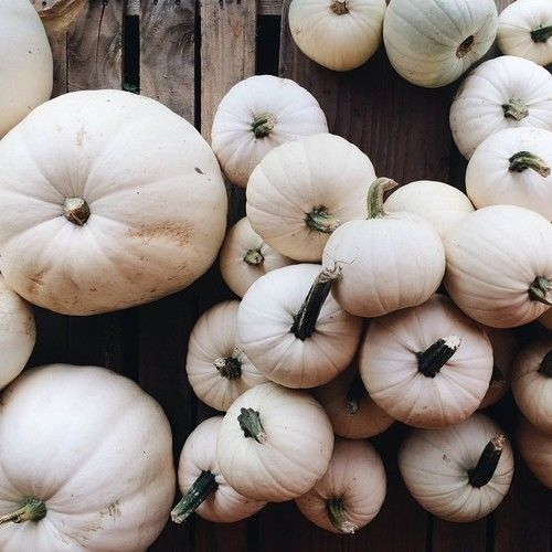 133823-White-Pumpkins